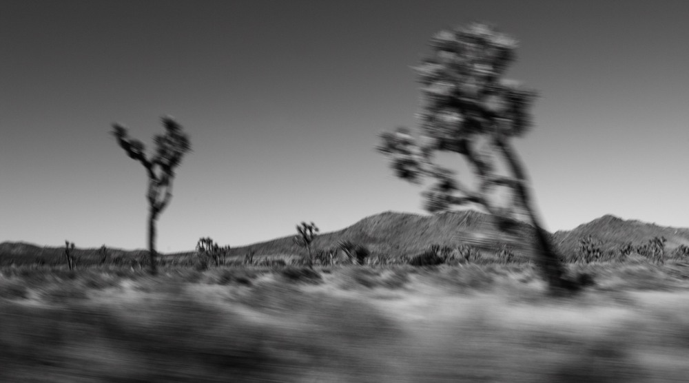 _MG_6032_Joshua_Tree.JPG