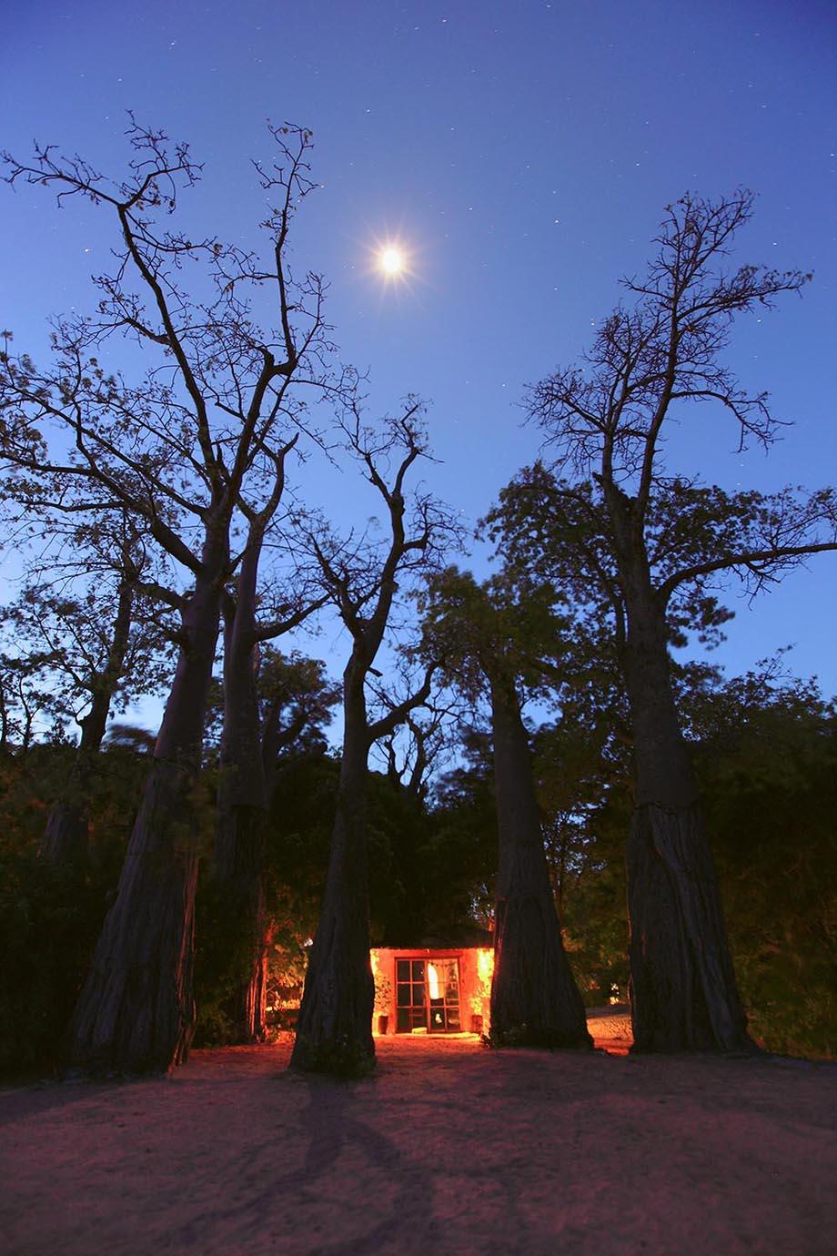 """Baobab Trees"""