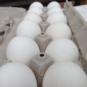 Dozen_eggs.jpg