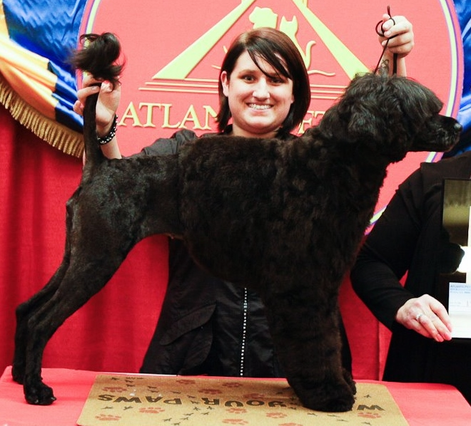Heather Hudson - Owner/ Lead Stylist   Atlanta Pet Fair - First Place Groom with Frankie the Portuguese Water Dog