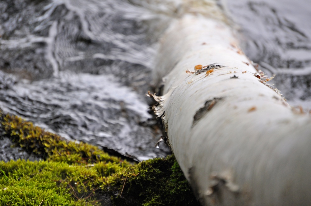 nature, log, moss, water, birch