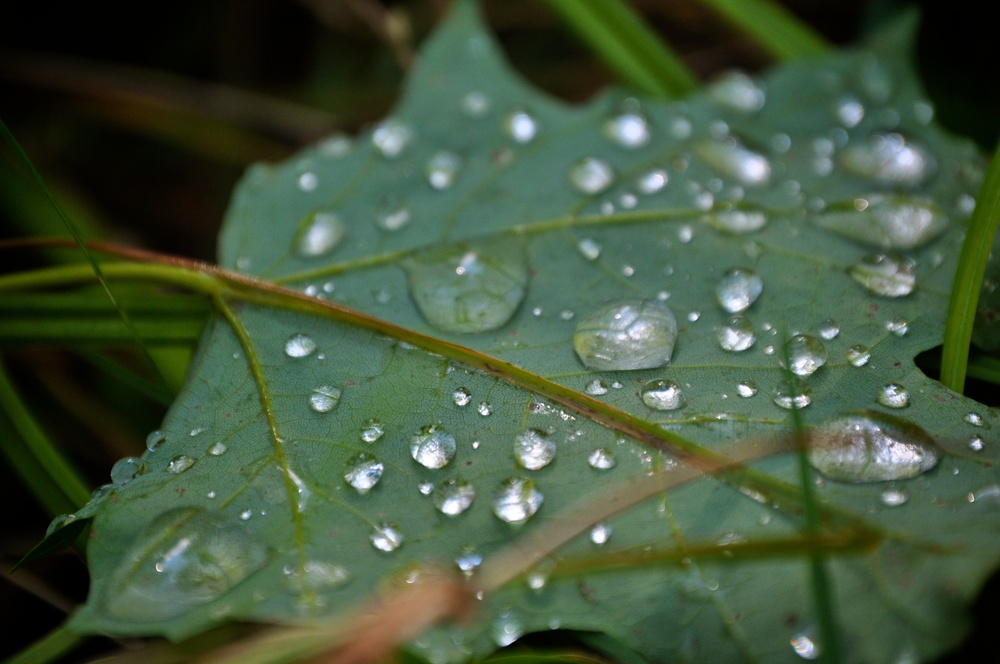 nature, dew, water, droplets, leaf, grass, detail, macro