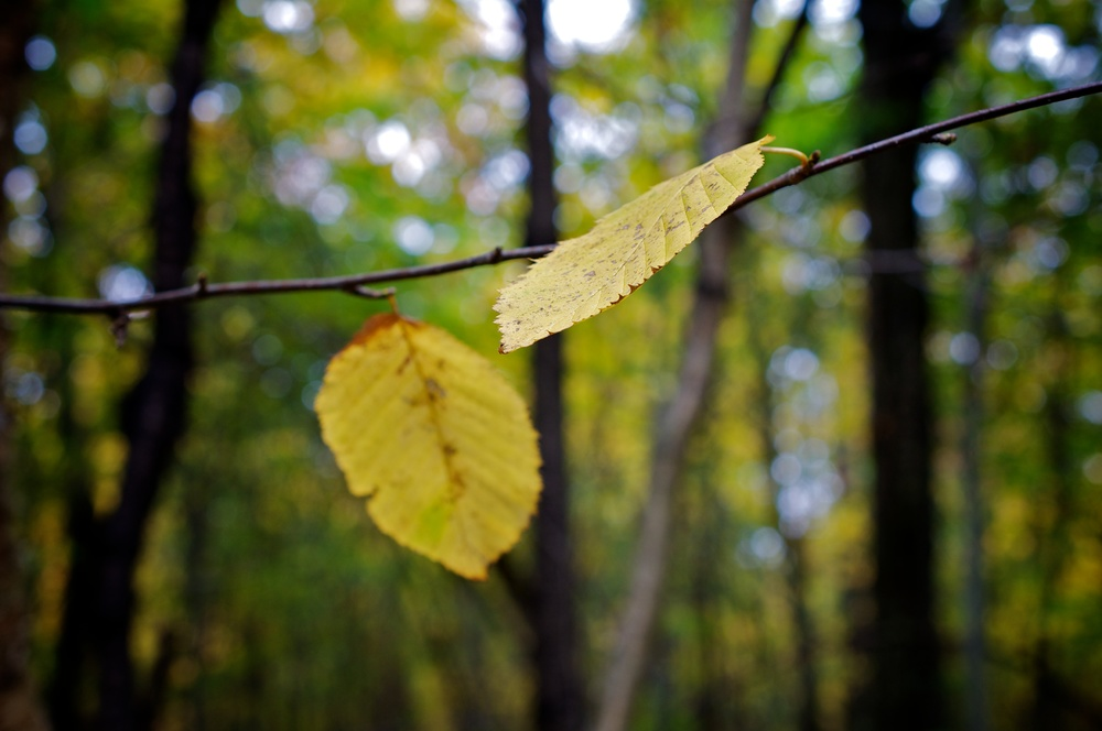 nature, leaves, fall, autumn, fall colors, forest