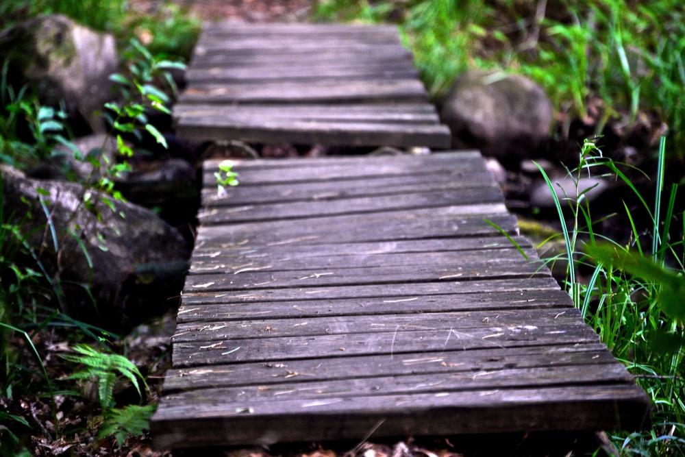 nature, bridge, path, trail