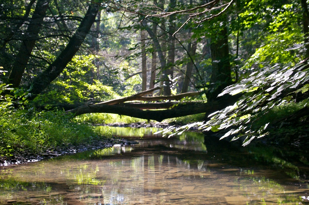 nature, forest, trees, shadows, stream, creek, water, landscape