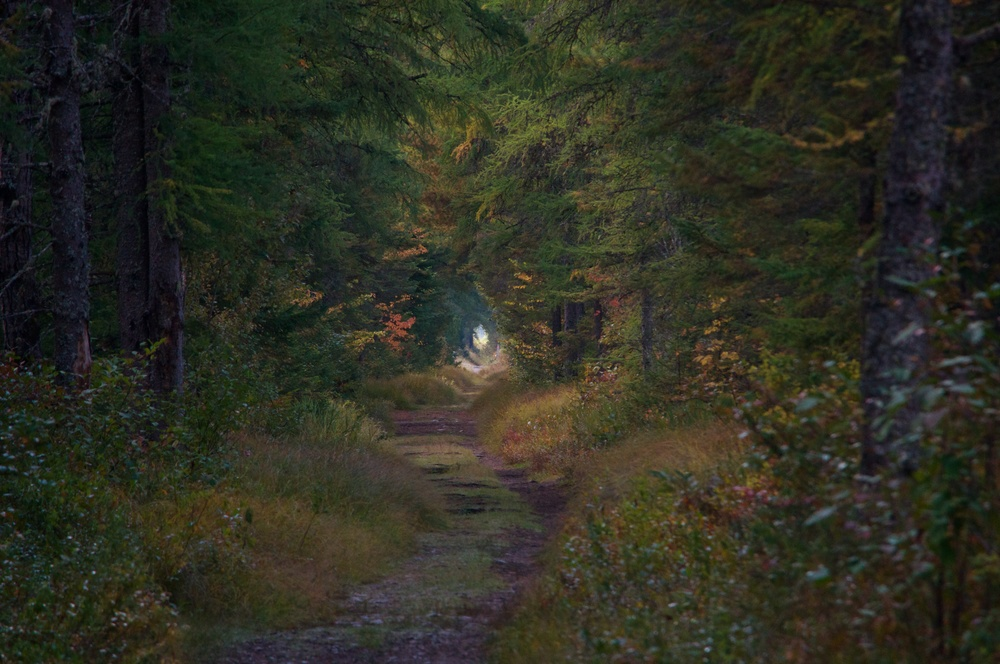 nature, landscape, forest, trail, path, bloomingdale bog, adirondacks