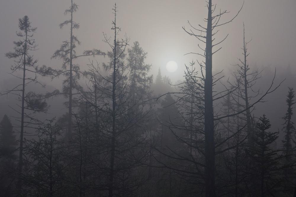 nature, landscape, forest, morning, sun, sunrise, fog, trees