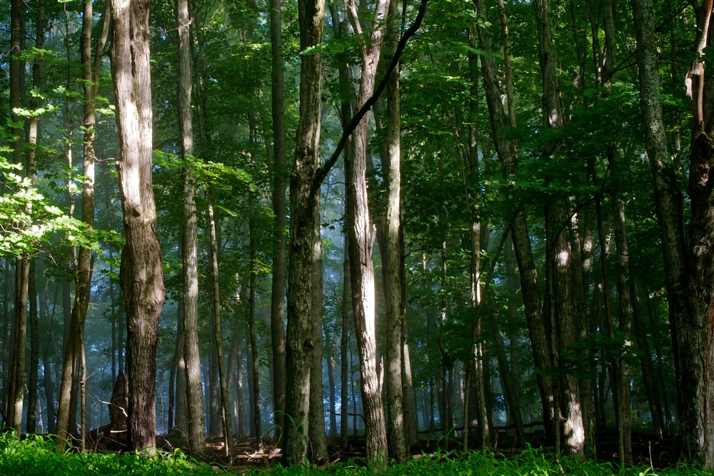 nature, forest, trees, shadows