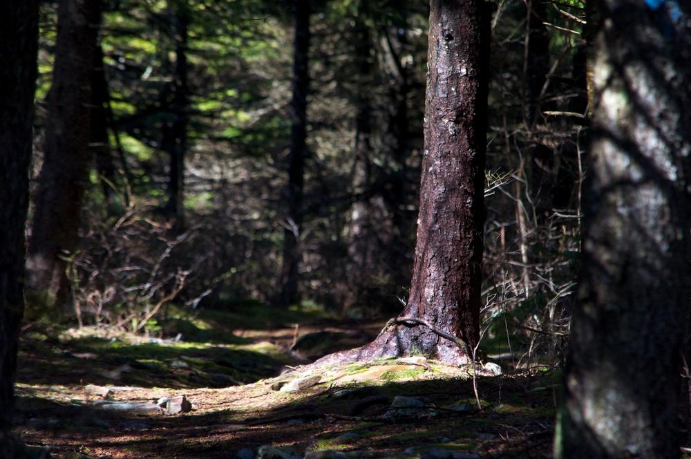 nature, trail, hiking, shadows