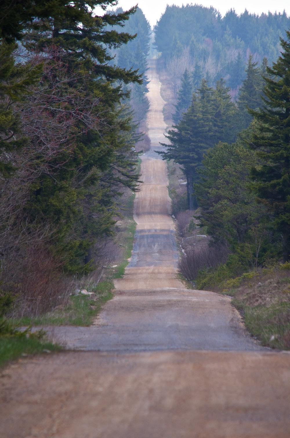 nature, forest, landscape, road, path, dolly sods, monongahela