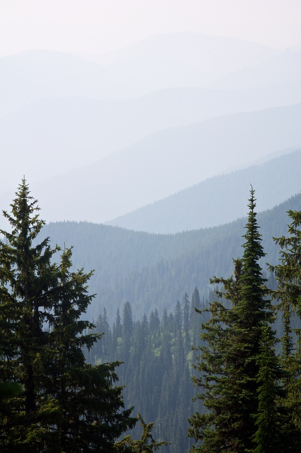 nature, landscape, forest, mountains, pine trees, pacific northwest, salmo-priest, selkirk mountains