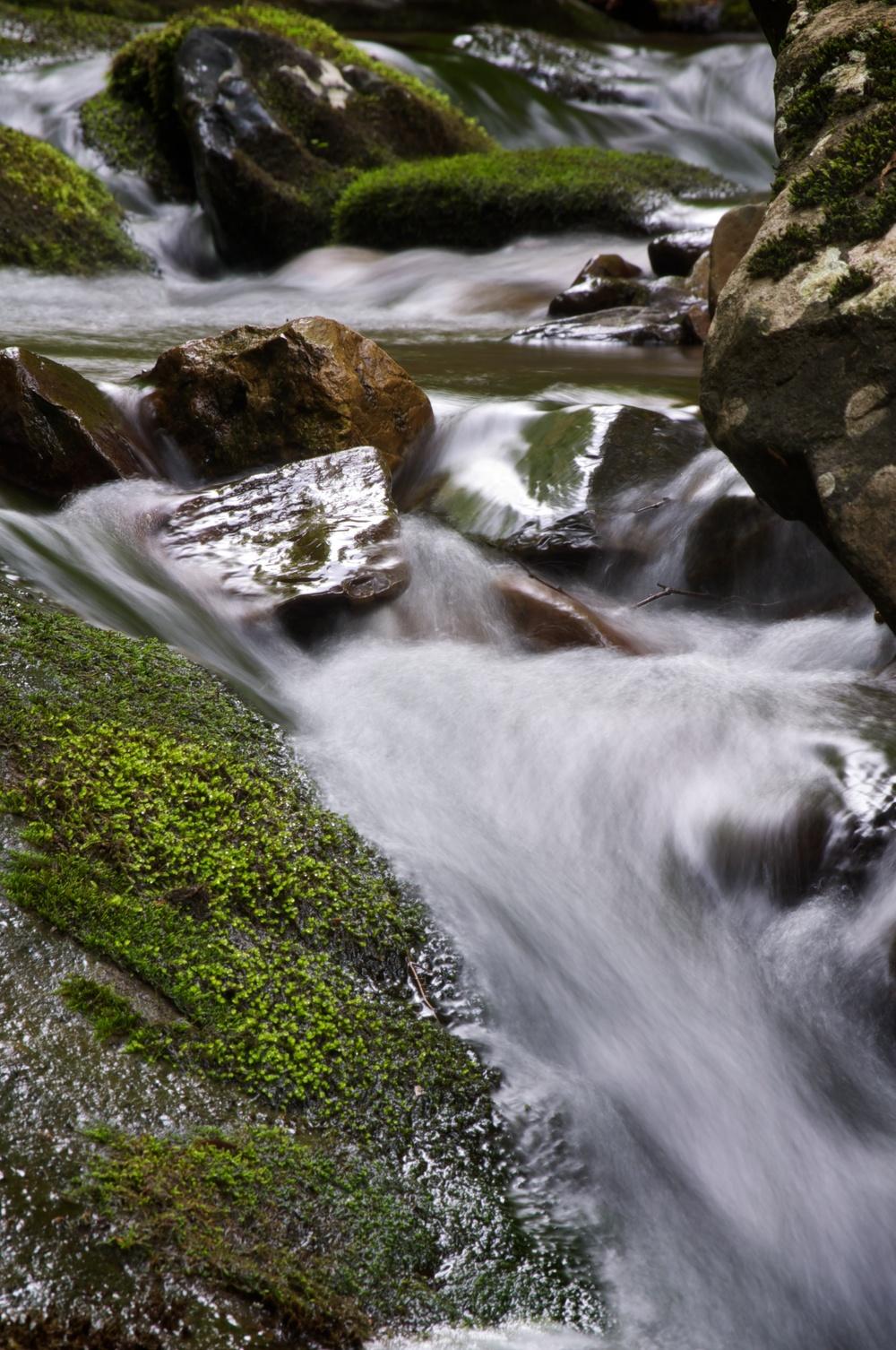 nature, stream, creek, river, water, moss