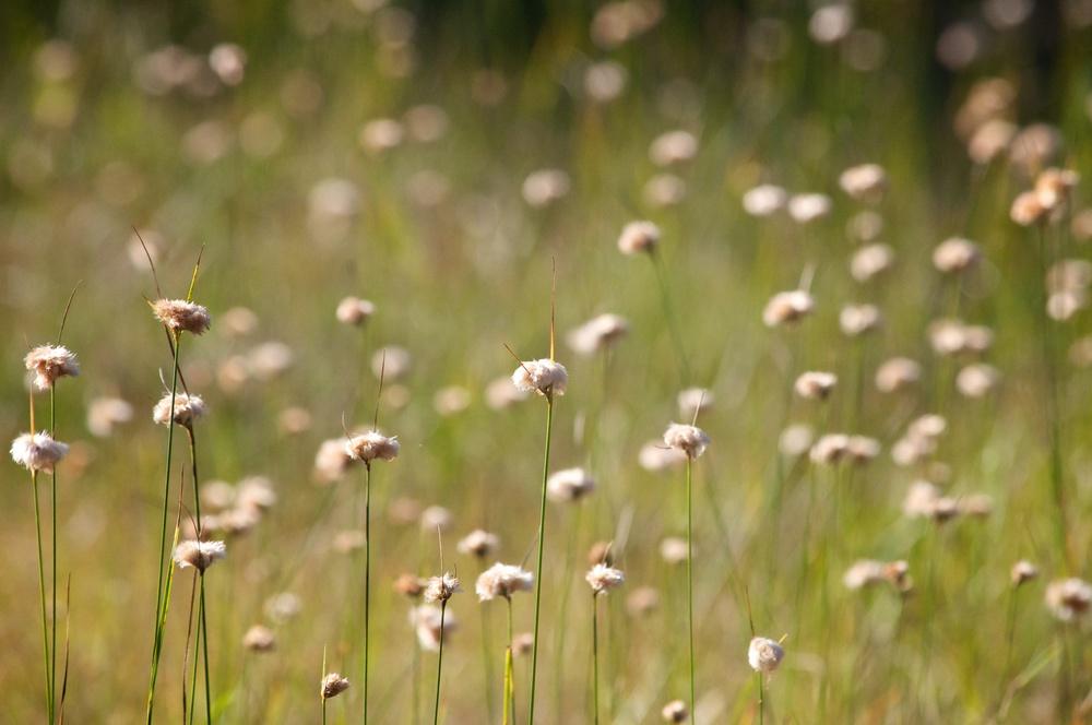 nature, meadow, grass, plants, flowers, wildflowers, wild flowers