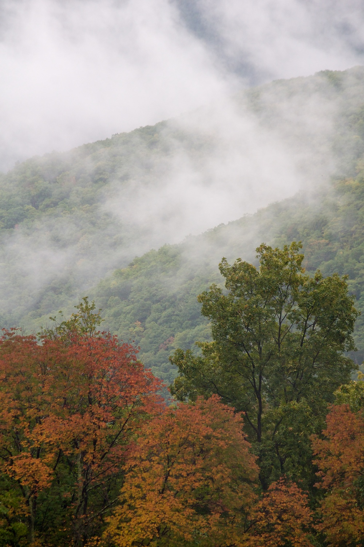 nature, landscape, forest, mountains, ridges, monongahela, dolly sods, fog, clouds, trees, fall, fall colors, autumn, autumn colors