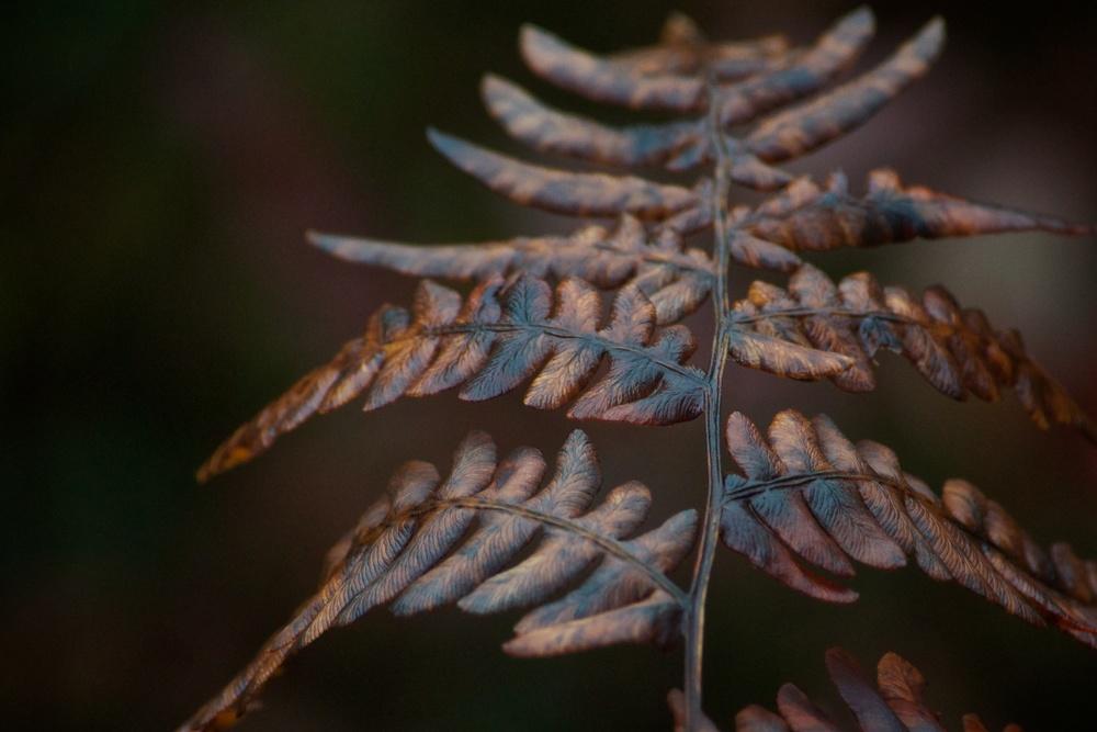 ferns (2).jpg