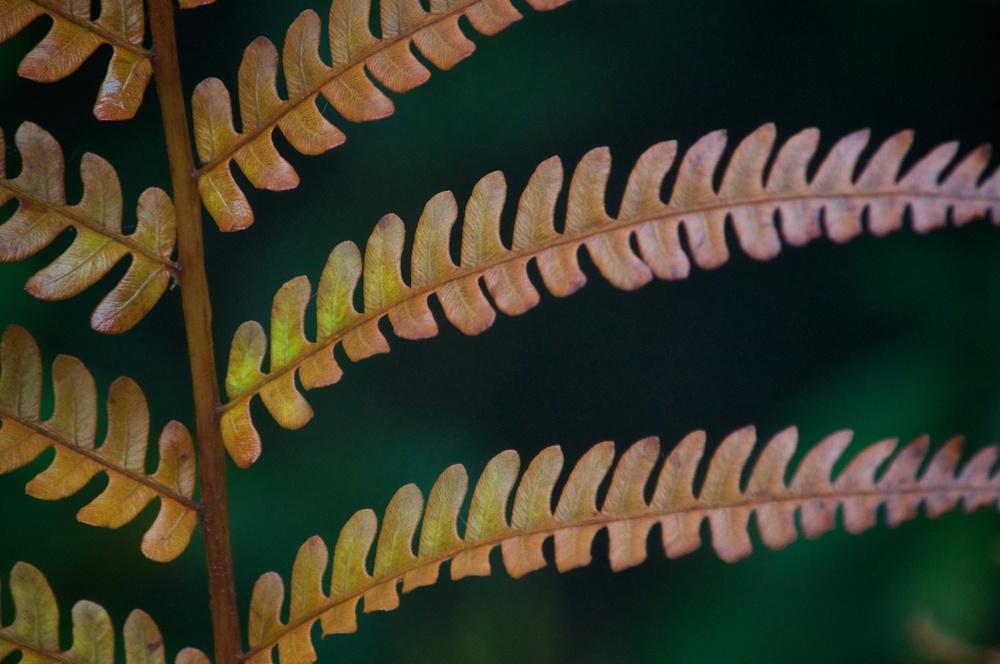 ferns (1).jpg