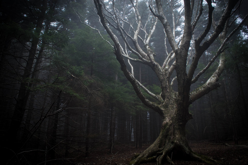 nature, tree, trees, light, shadows, sunlight, forest, dolly sods, monongahela