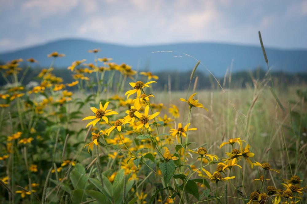 nature, plantlife, plants, flora, flowers, wildflowers, meadow
