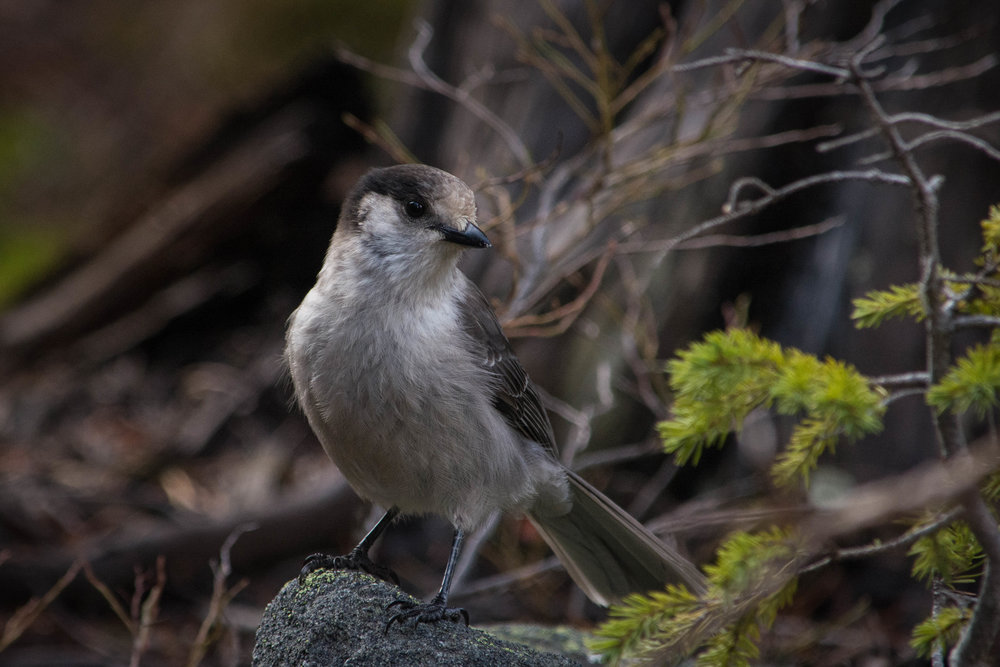 Enchantments-12.jpg