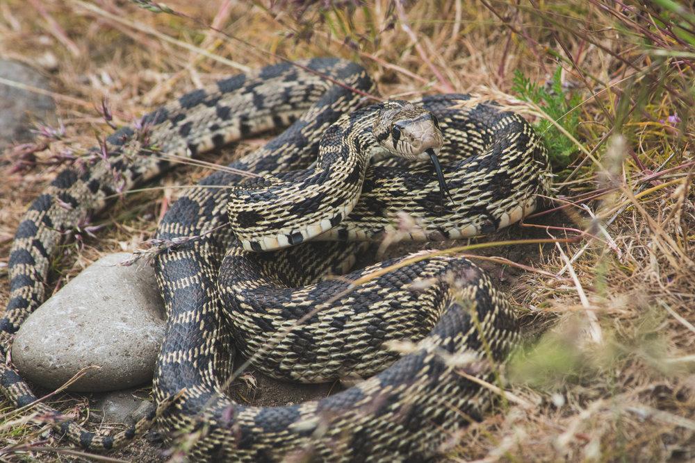20-Snake.jpg