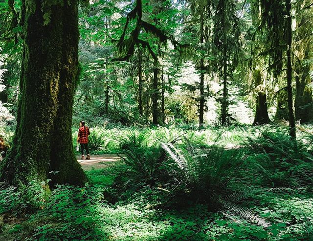 Exploring the temperate rainforests of the Olympic Peninsula, pretty much Fern Gully.