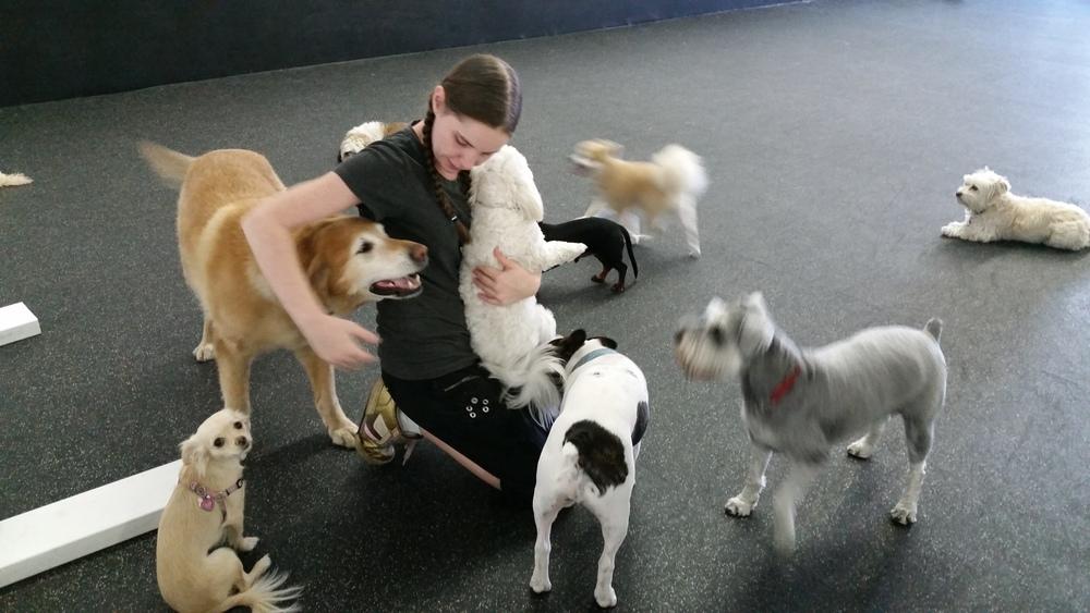 dog-daycare-kelowna