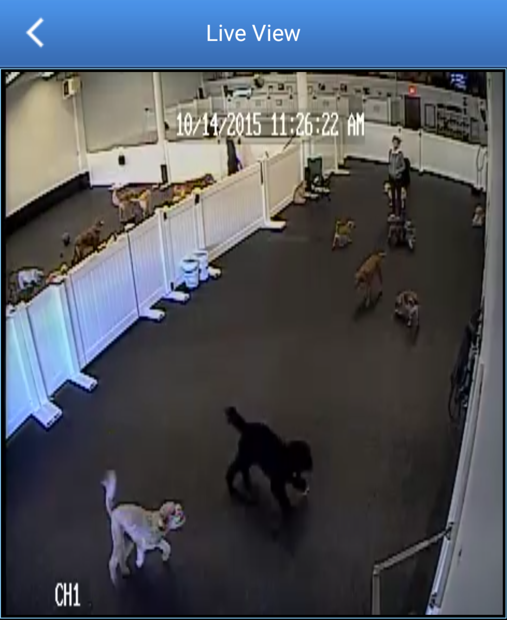 dog-daycare-webcams-kelowna.jpg