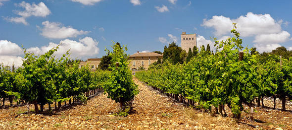 wine_provence_gallery_2