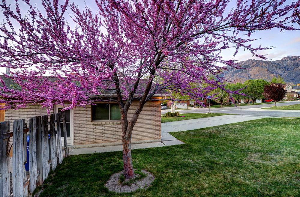 House Sundown Tree1.jpg