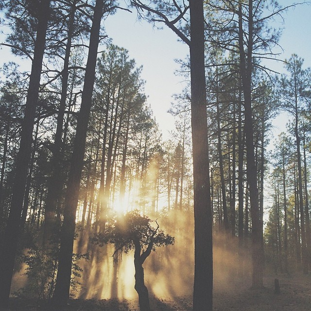 Sun shining through trees and dust.