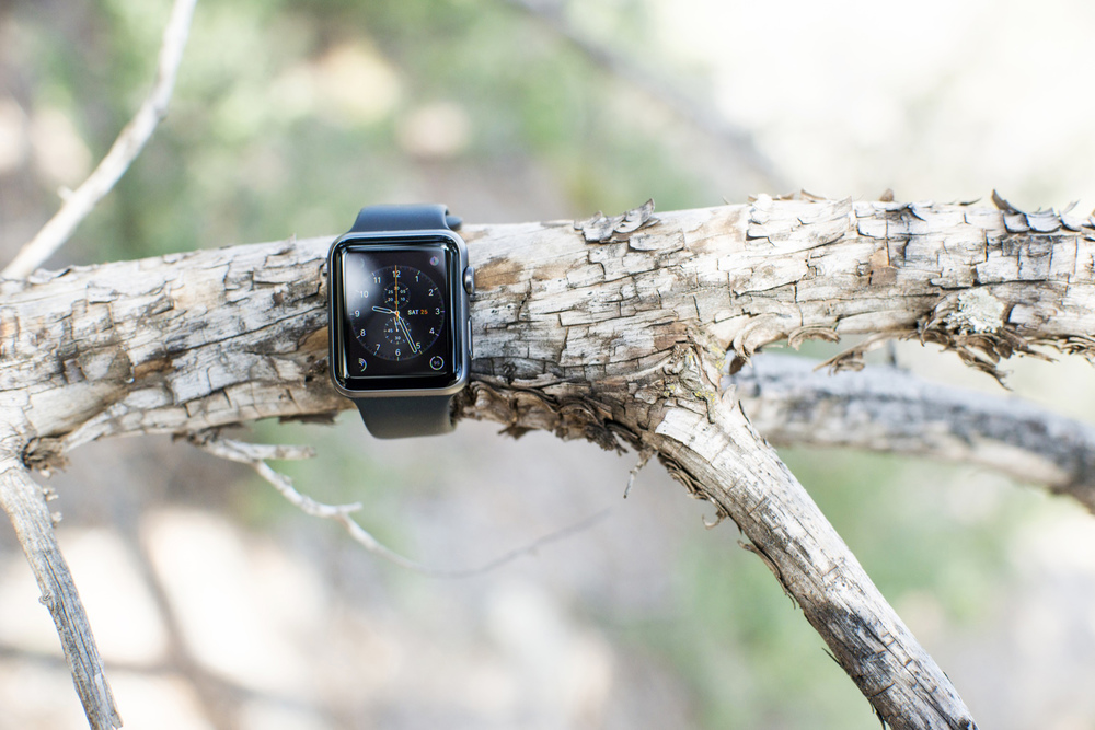 Chronograph on a Branch