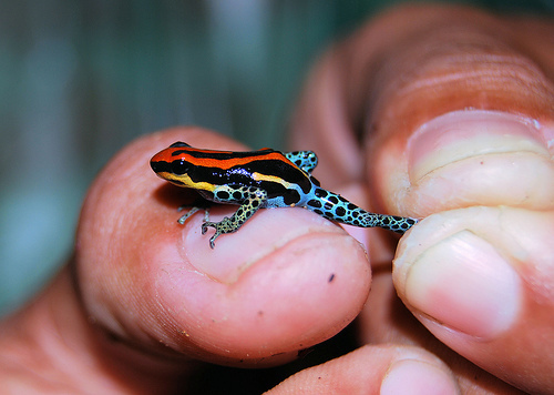happyhues :     tiny rainbow frog! (via  we heart it  )