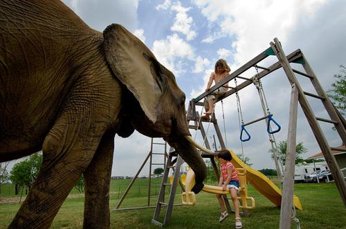elephants always seem so kind.