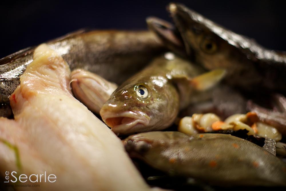 Newyln-fish-festival 27.jpg