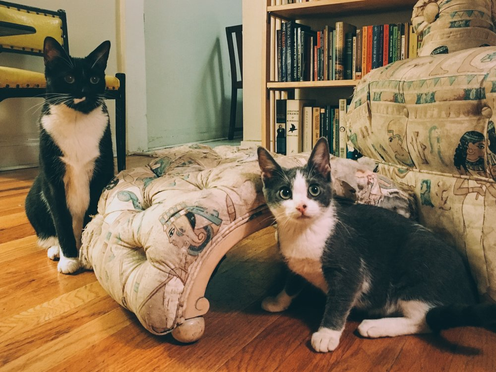 Meowy (left) and Jonas (right) and the sweet-ass chair they have since destroyed, RIP.