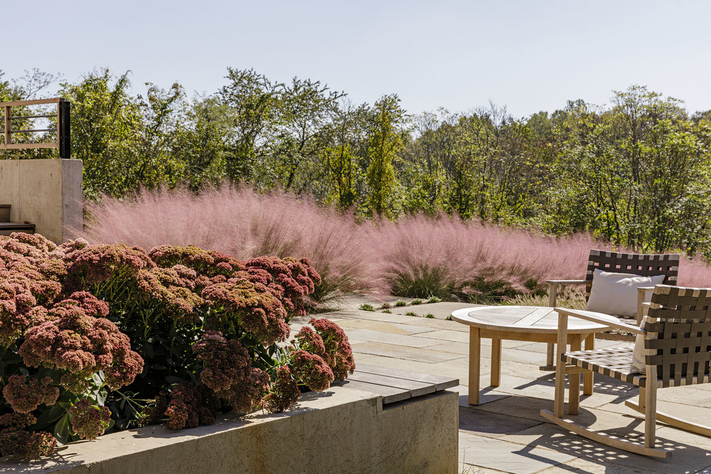 Grounded_muhly-grass_landscape-architecture-virginia_modern_terrace.jpg