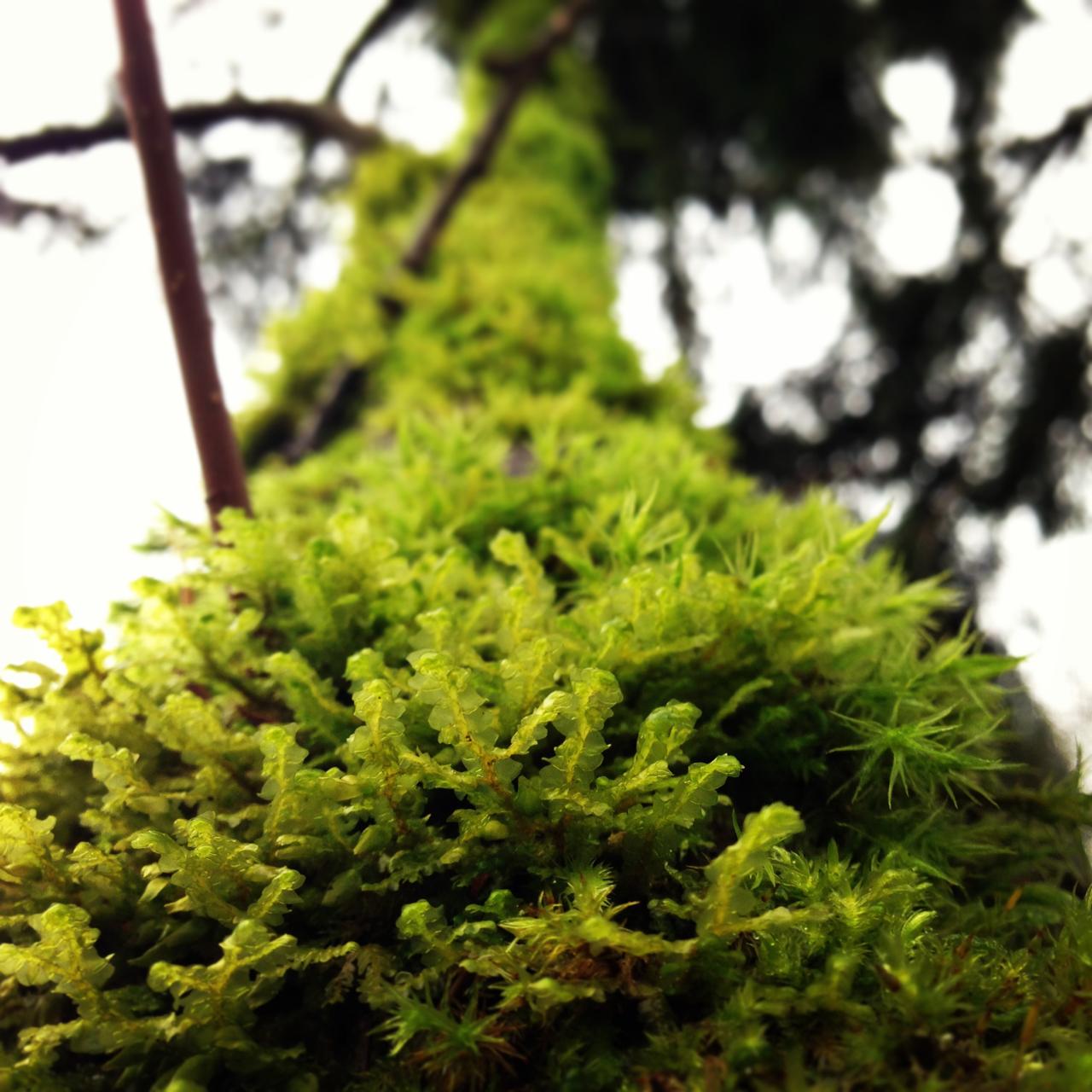 Happy Moss.