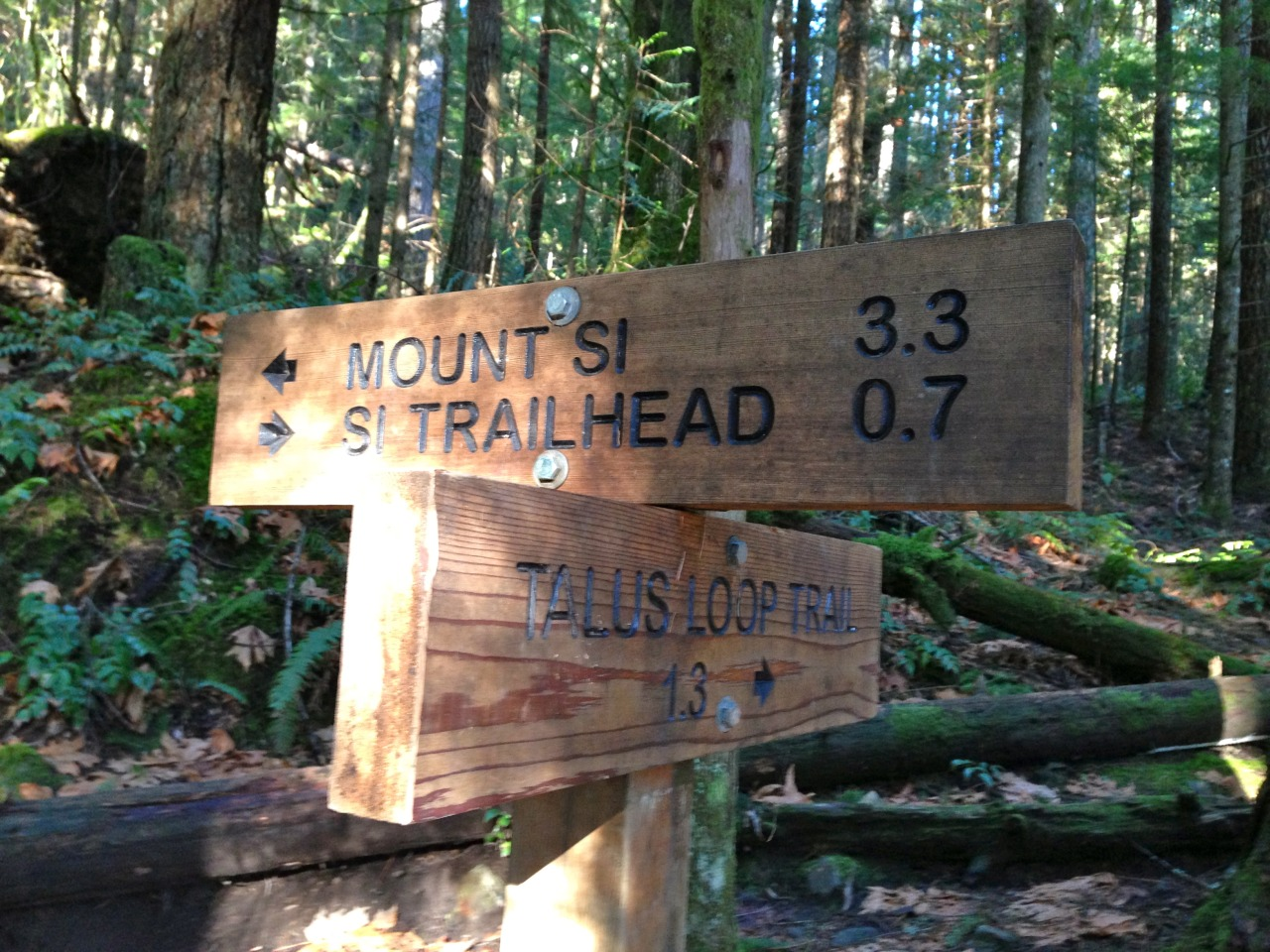 Hiked the Mount Si Trail yesterday! It was basically a 4 mile hike up a mountainside. Very steep trail, but super fun and challenging.