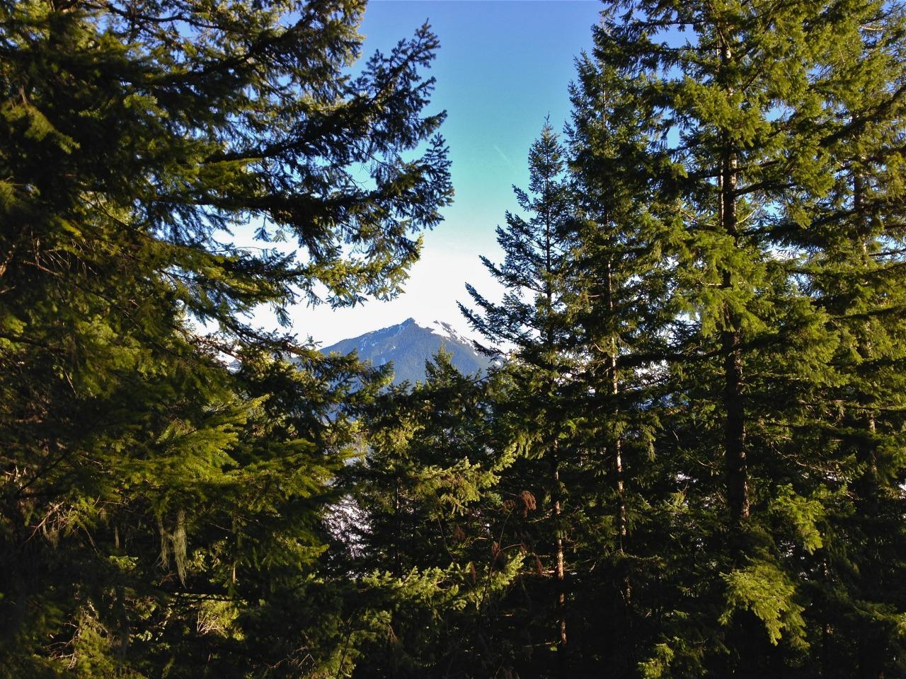 mountains peeking through the trees