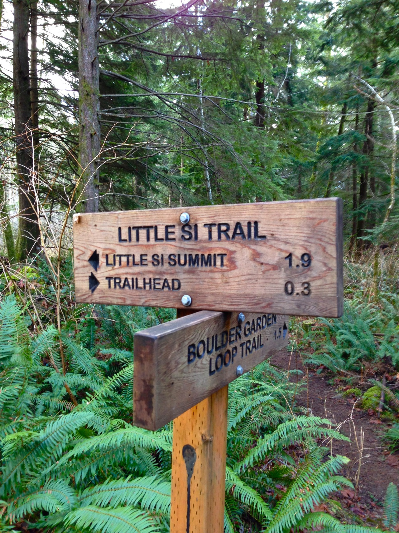 Hiked the Little Si trail today! It was super scenic and a lot less severe than the Mount Si trail.