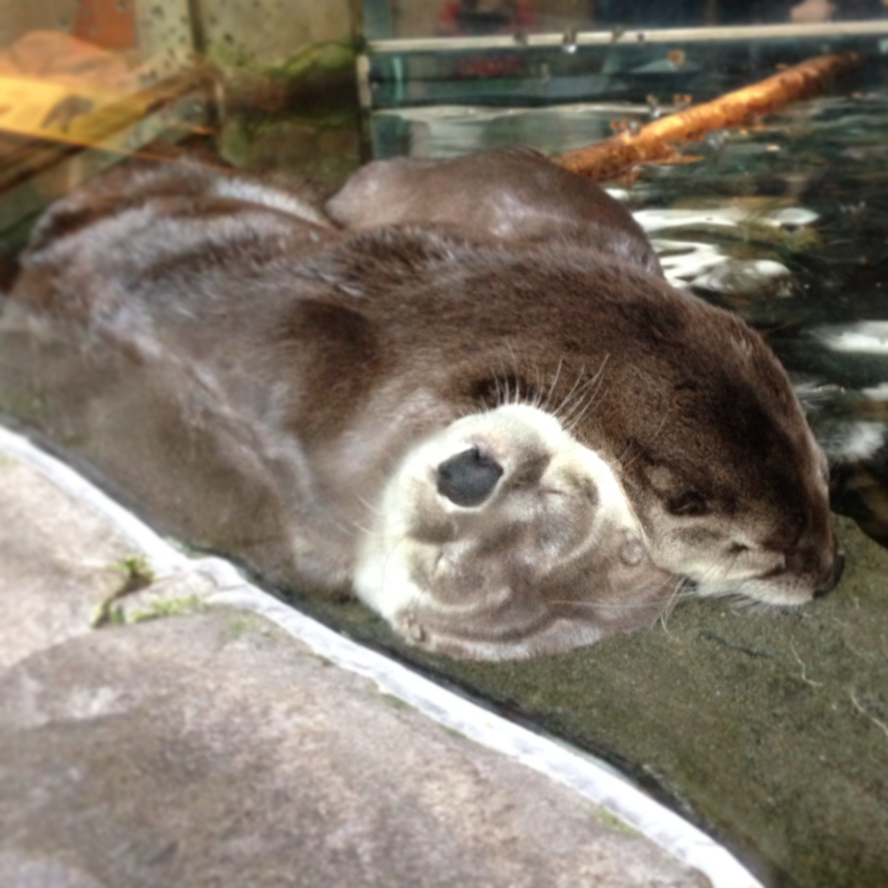 Otter snugs at the aquarium