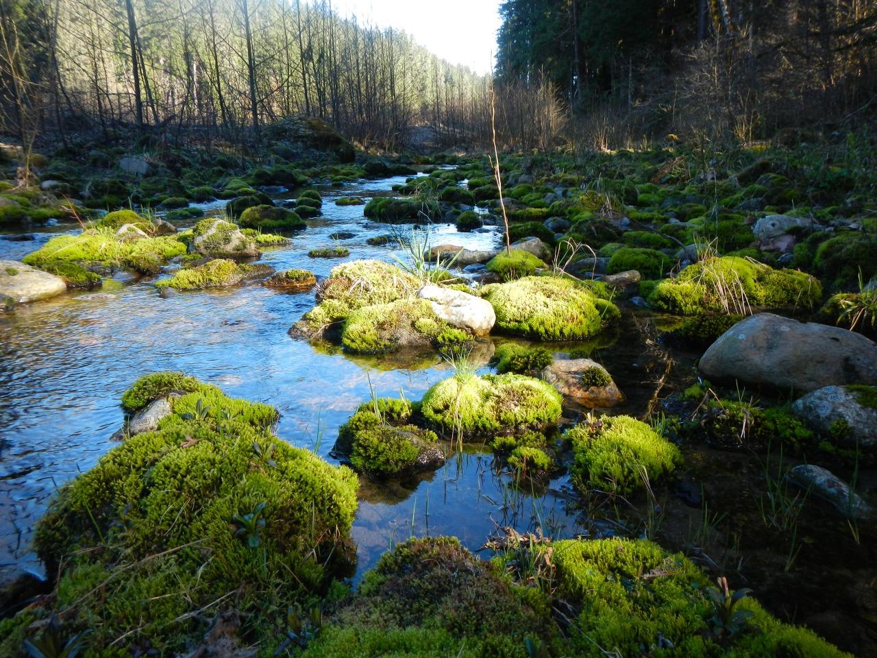 mossy river rocks