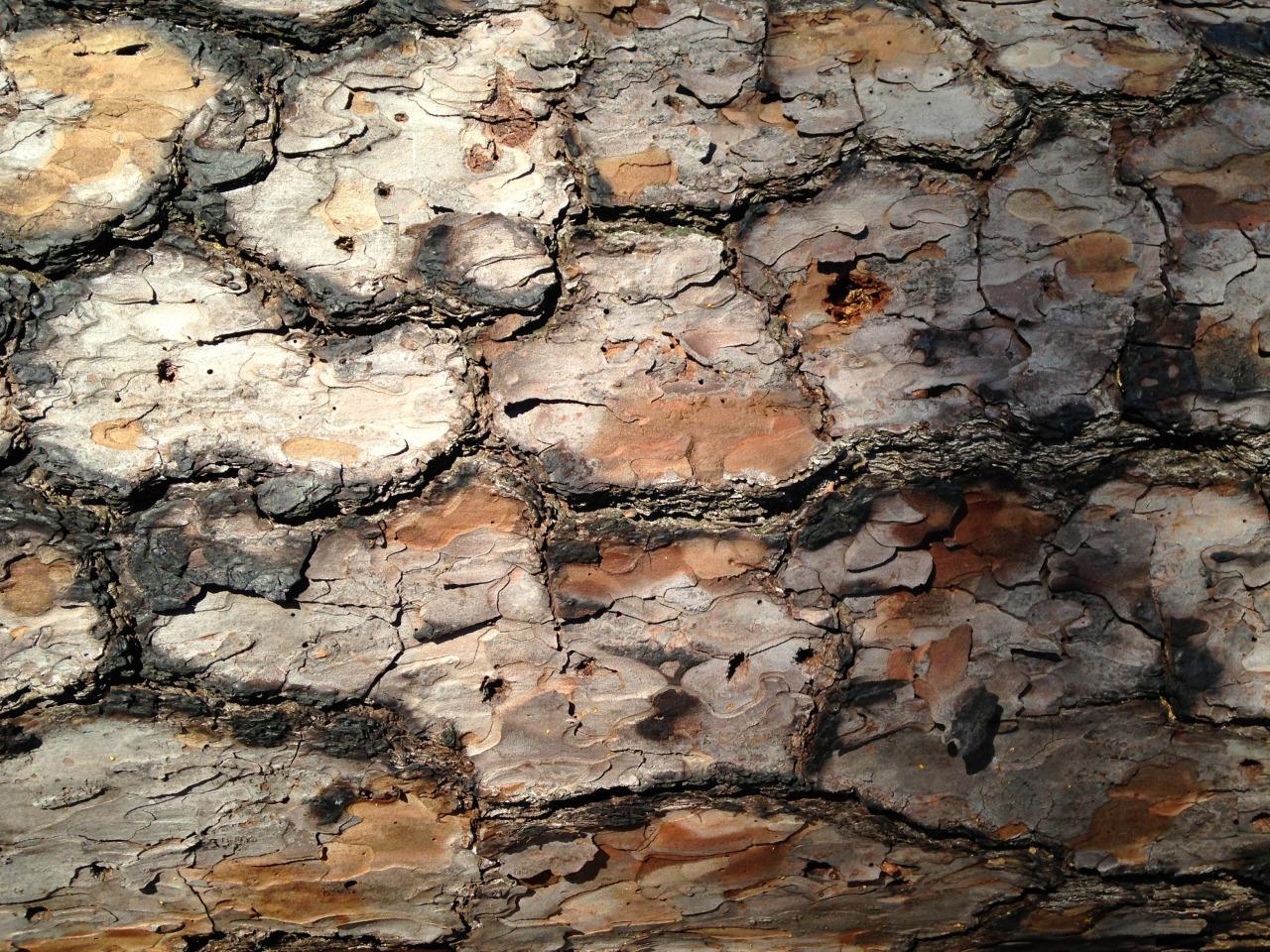 Bark 2