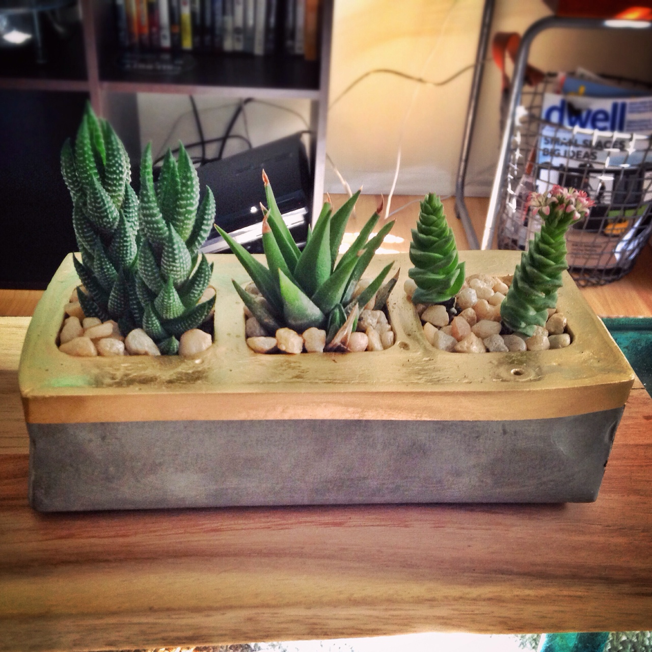 Made this concrete planter for some mini succulents this weekend. Follow me on Instagram for more crazyyyyyy shenanigans http://instagram.com/grizzpiece