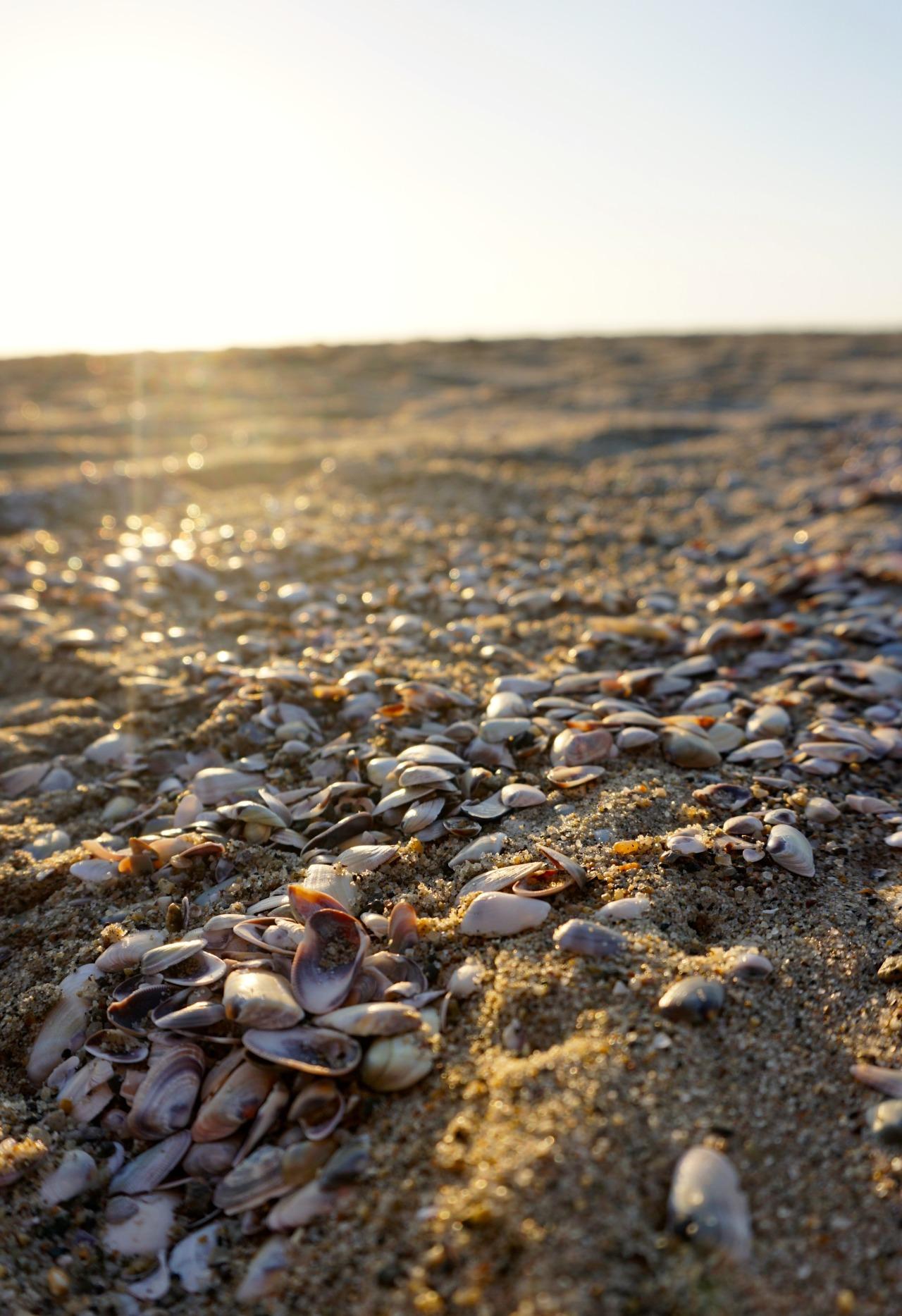Mini Shells