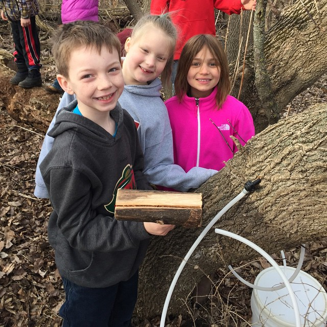Tapping boxelder trees with the second graders. #mapletree #sap #minnesotaspring #redwingelc