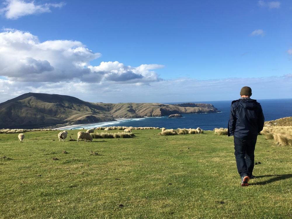 Avoid the lamb mines!!
