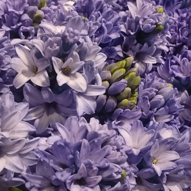 Bluebells 💙💙🌠💙💙 #bluebells #flowers #love #natureisbeautiful #spring #inbloom #fluer