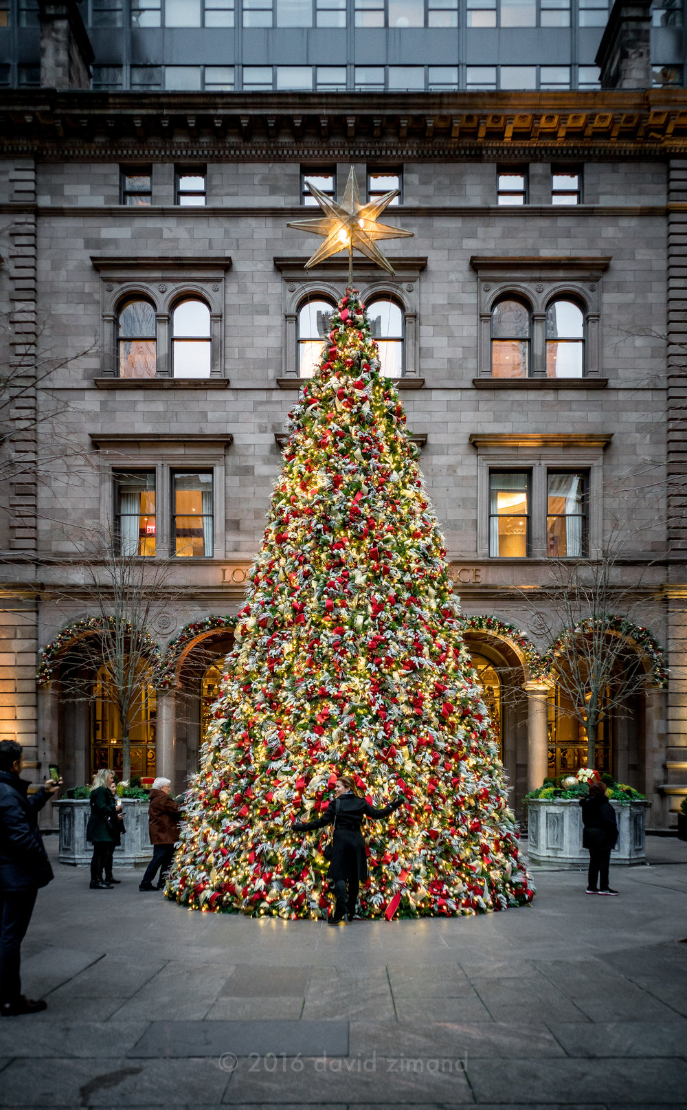 Tree at the Palace Hotel in NYC