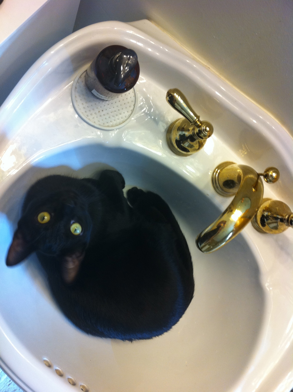 bodhi in sink.jpg